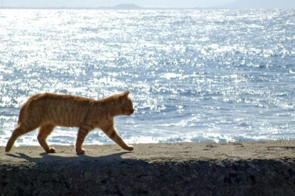 ボイリーを奪う猫